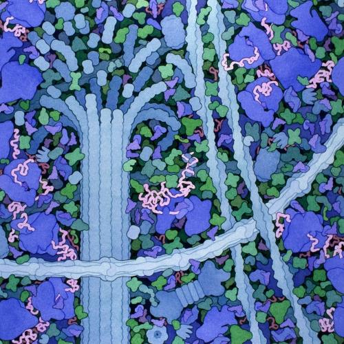 biosites-cytoplasm.jpg