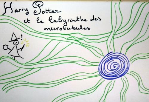 microtub2.jpg